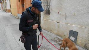 Cani Carabinieri bocconi avvelenati